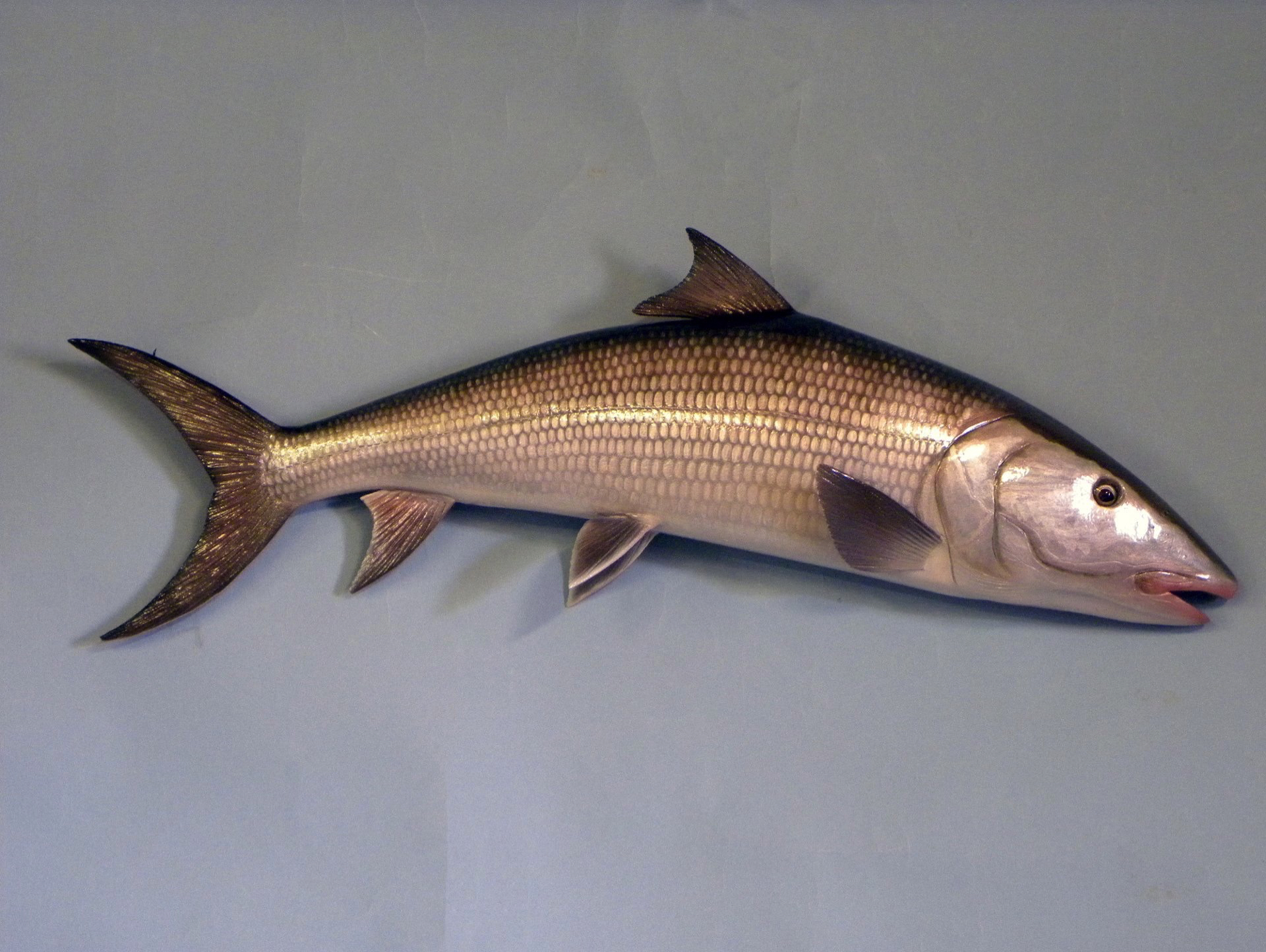 Wall mount fish carvings gallery